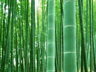 小清新唯美竹林风
