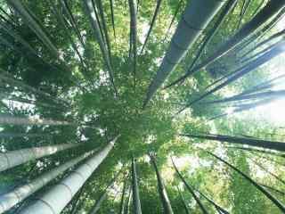 唯美的竹林与天空