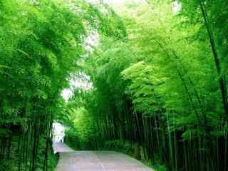 清新唯美竹林风景