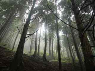 郁郁葱葱的庐山树林桌面壁纸