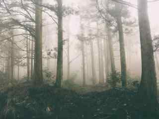 云雾缭绕的庐山树林桌面壁纸