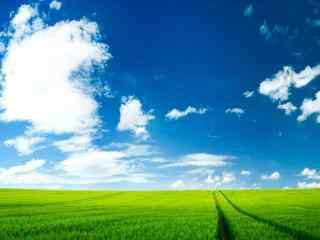 绿色草原与晴朗天空护眼桌面壁纸