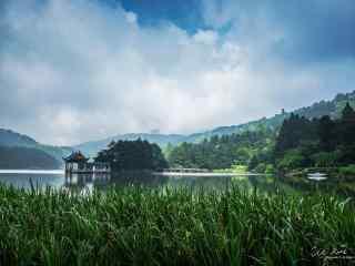 庐山如琴湖畔的芦苇桌面壁纸