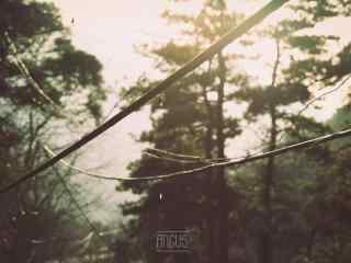 唯美夕阳下的庐山树林桌面壁纸