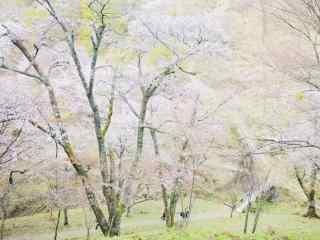 古都奈良吉野山超