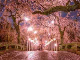 唯美樱花林夜景桌