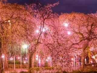 樱花林夜景唯美桌