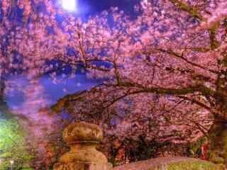 樱花林夜景高清桌