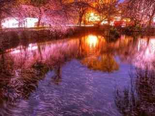 樱花林夜景高清风