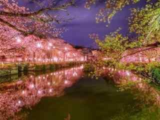 樱花林夜景唯美风