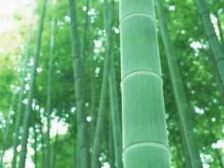 南山竹海清新竹林桌面壁纸