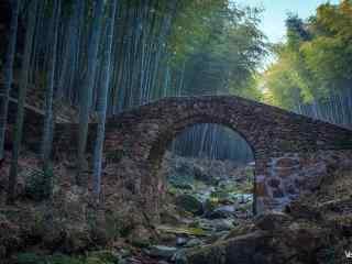宜兴竹海竹林深处的小桥桌面壁纸
