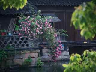 水乡乌镇风景之摄影壁纸