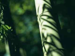 唯美南山竹海竹子上斑驳光影桌面壁纸