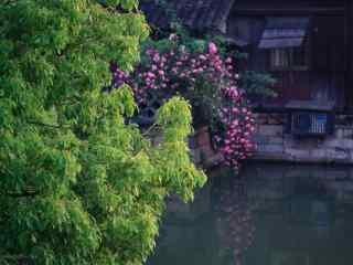 小清新乌镇风景之摄影壁纸