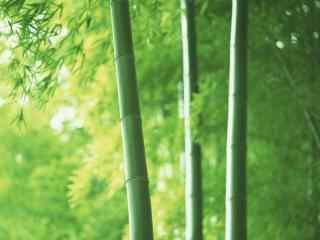 清新绿色南山竹海竹子桌面壁纸