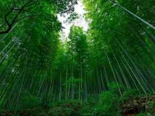 绿色护眼宜兴竹海竹林桌面壁纸