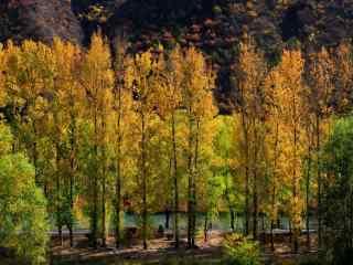 雾灵山森林风景桌面壁纸