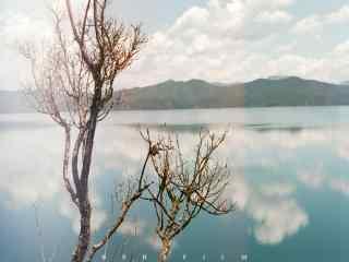 泸沽湖唯美树木风