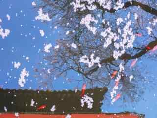 唯美日系好看的故宫杏花桌面壁纸