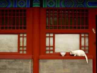 故宫窗门上的小猫咪桌面壁纸