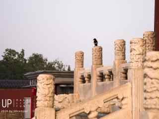 唯美故宫长廊上休息鸟儿桌面壁纸