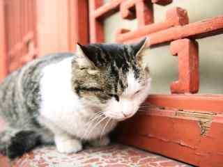 故宫窗台上可爱小猫咪桌面壁纸