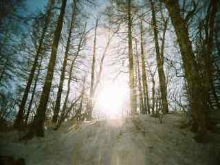 阳关穿过长白山树林桌面壁纸