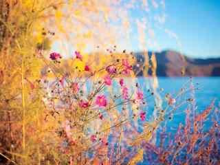 美丽的泸沽湖风景
