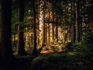 清晨阳光中的森林