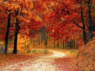 唯美的红色枫林桌面壁纸