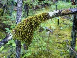 绿色原始森林风景桌面壁纸