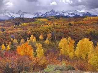 美丽的黄色森林风景摄影壁纸