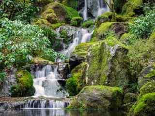原始森林风景桌面壁纸