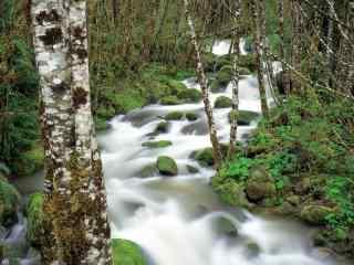 森林护眼风景高清桌面壁纸