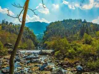森林风景创意油画摄影壁纸