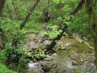 唯美的森林风景护眼壁纸