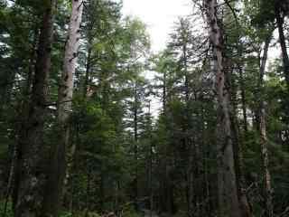 写实的森林风景摄影桌面壁纸
