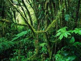 绿色森林风景护眼桌面壁纸