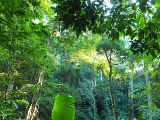 美丽的森林风景护眼桌面壁纸