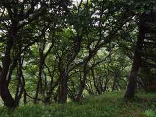 森林护眼风景桌面壁纸