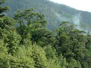 好看的森林风景护眼桌面壁纸