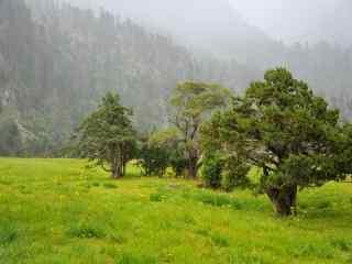 美丽原始森林风景桌面壁纸