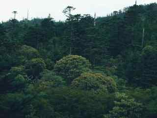 森林风景摄影桌面壁纸