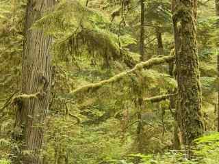 护眼森林风景桌面壁纸