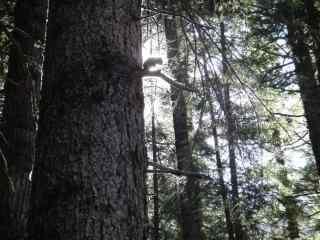 森林风景护眼高清壁纸