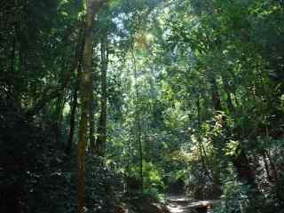 美丽的绿色大森林风景壁纸