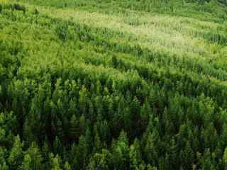 绿色护眼森林摄影桌面壁纸
