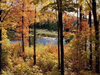 唯美的秋日森林风景壁纸