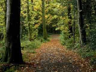 美丽的森林风景桌面壁纸